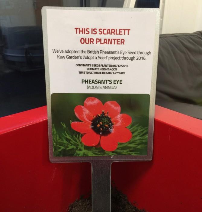 Plant Pot Sign